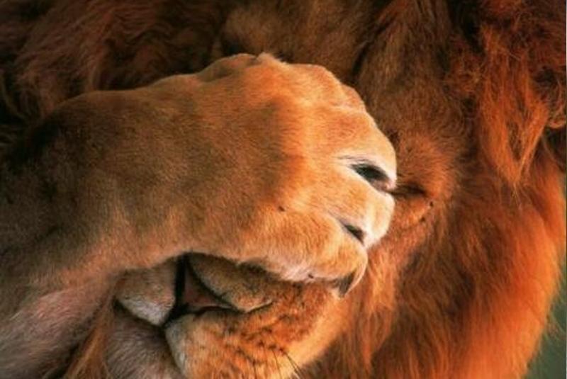 Zwei lebenswichtige Lektionen: Was wir von der Löwenjagd lernen können