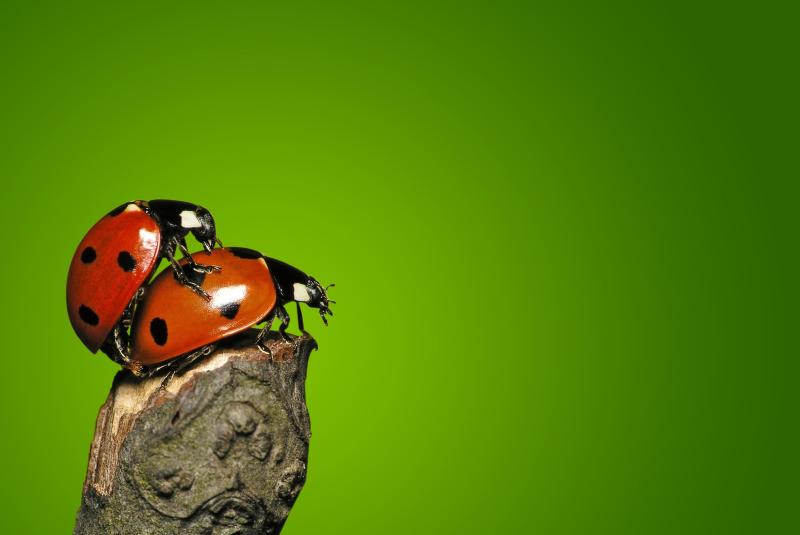 Monogamie oder offene Beziehung - Ist Monogamie einfach nicht mehr in?